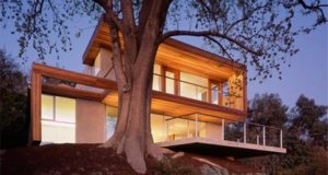 tree in a house