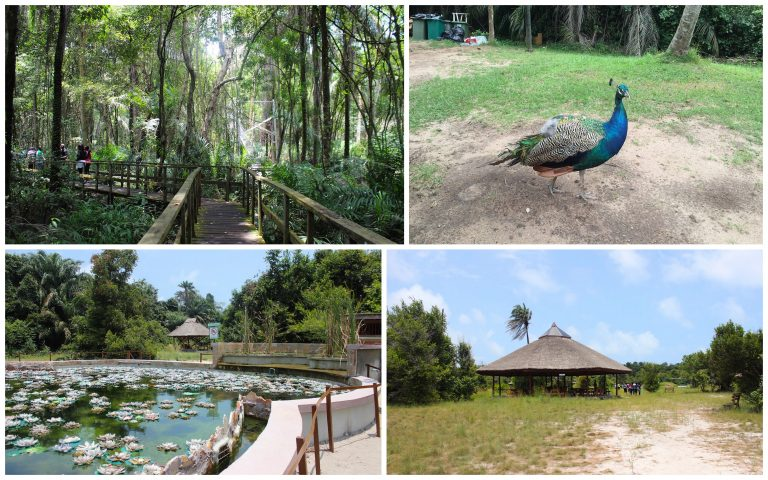 Everything You Need To Know: The Lekki Conservation Center