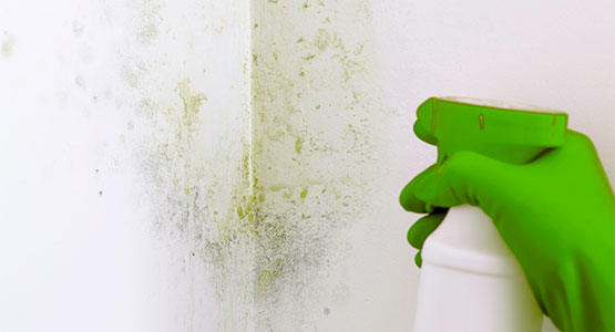 Basic Tips: How To Paint Your Room Like a Pro